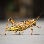 grasshopper-279532_1920